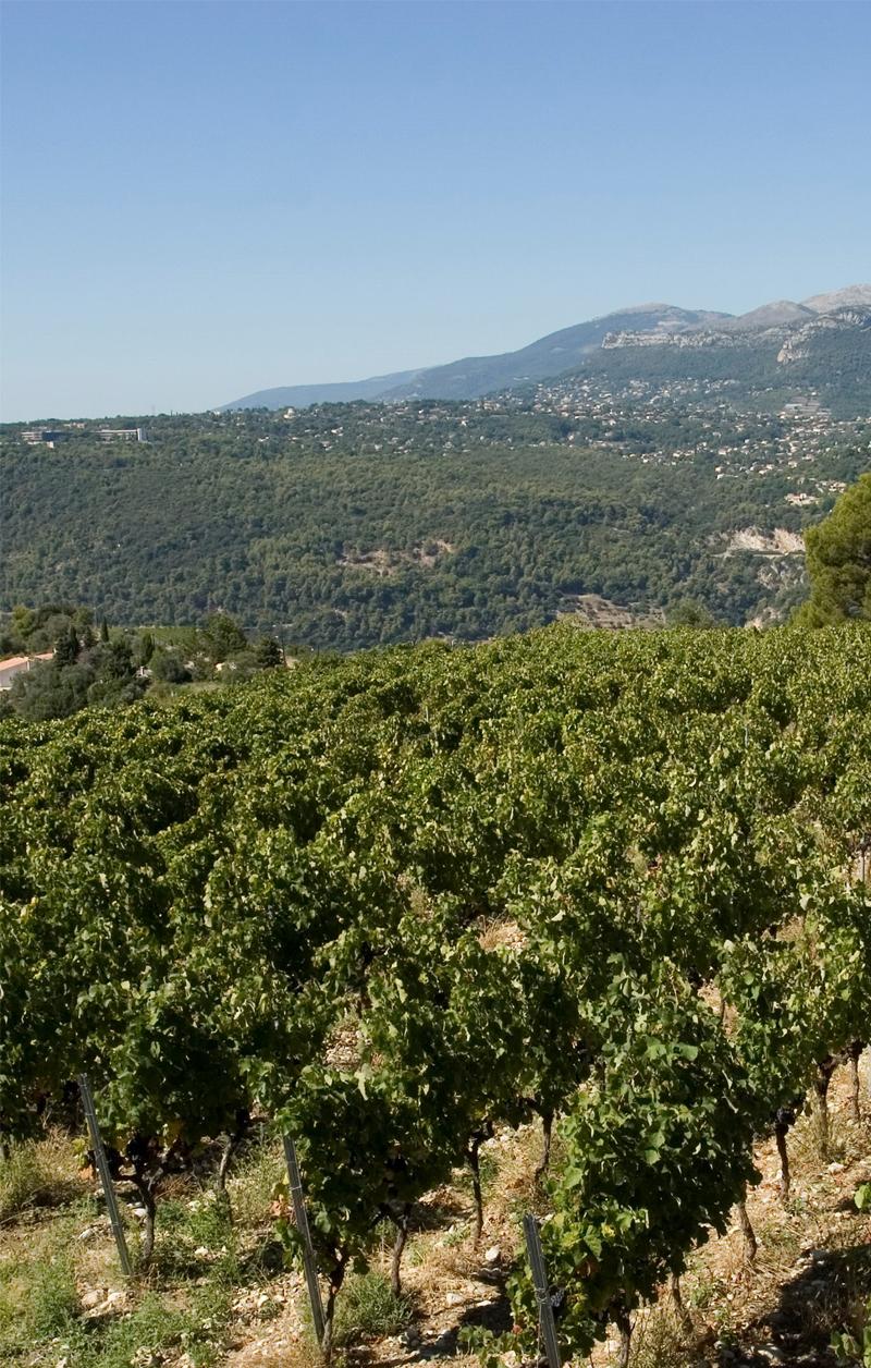 Château de Bellet, le vignoble