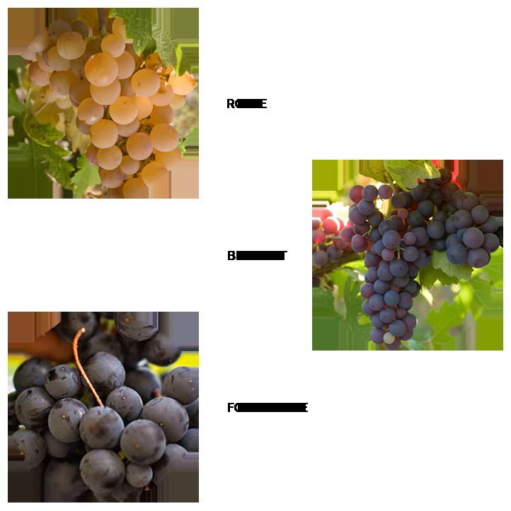 Cépages, Rolle, Braquet, Folle Noire, Château de Bellet