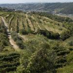 Vue sur les vignes - Chateau de Bellet